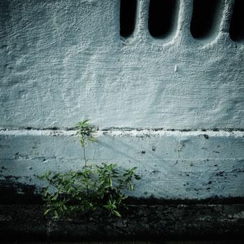 120909_ご近所さんちの壁.jpg