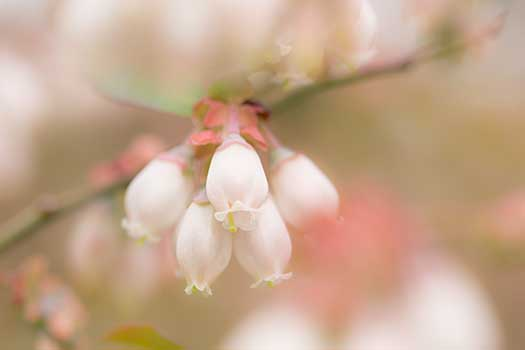 150419_うちの庭-01.jpg
