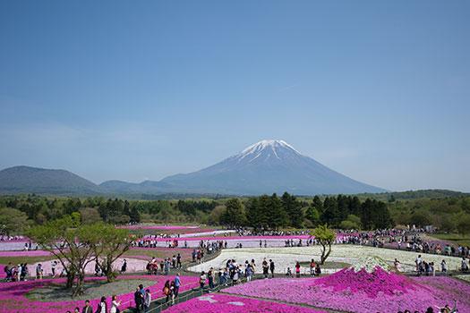 160508_富士芝桜まつり-02.jpg