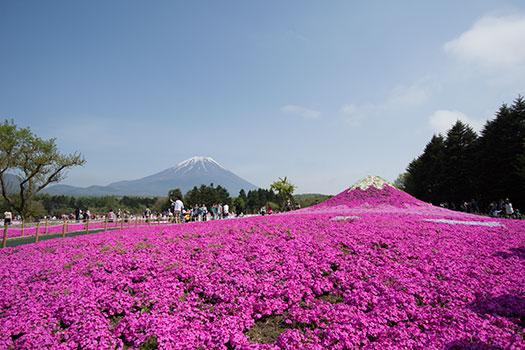 160508_富士芝桜まつり-03.jpg