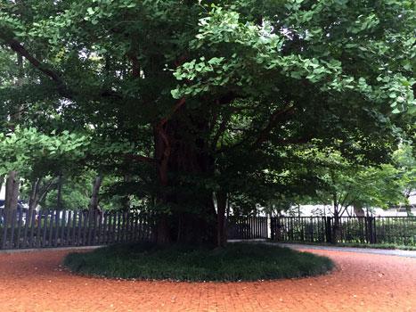 160828_木々との対話-05.jpg