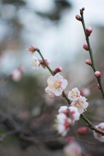 170129_うちの庭-01.jpg