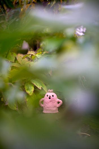 171112_うちの庭.jpg