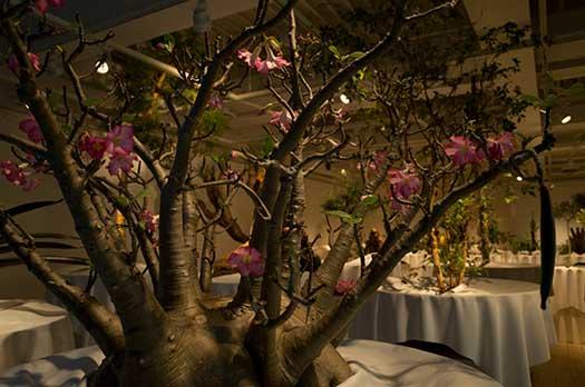 150726_ウルトラ植物博覧会-01.jpg