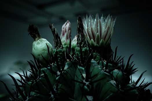 150726_ウルトラ植物博覧会-02.jpg