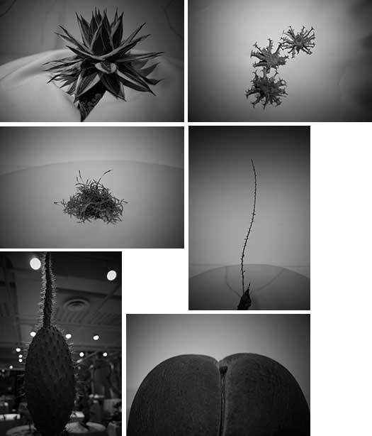 150726_ウルトラ植物博覧会-03.jpg
