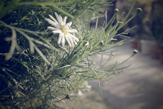 190317-うちの庭-01.jpg