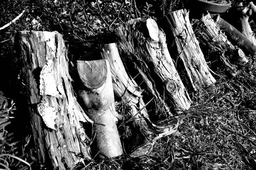 190317-うちの庭-02.jpg