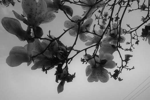 190317-うちの庭-04.jpg